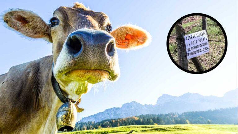 Una vaca junto a una imagen del cartel. © Shutterstock