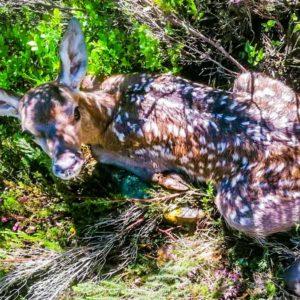 Esta es la versión de Bambi y el cazador que no nos quieren enseñar
