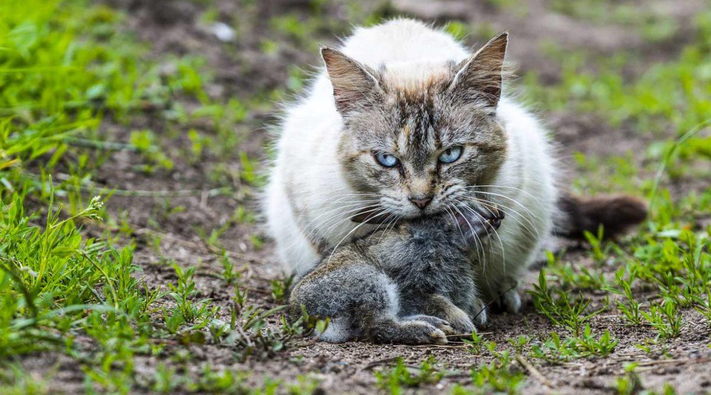 Fundación Artemisan estudia los efectos de los gatos domésticos en la fauna silvestre