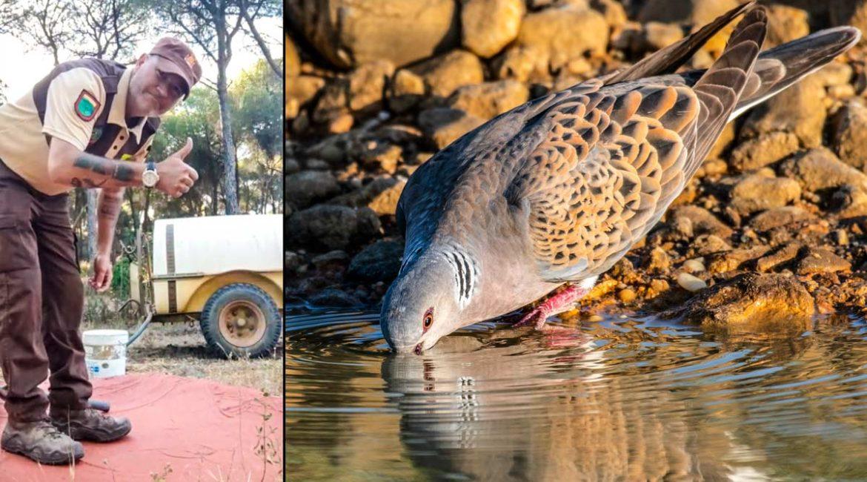 Afilada reflexión de un guarda rural de caza mientras llena un balsa de agua de la que beberán las tórtolas
