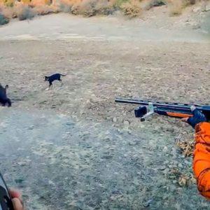 Esta es la situación en la que ningún cazador de jabalí desea verse