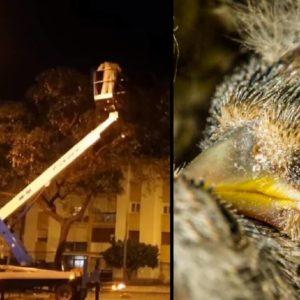 Un silvestrista denuncia la fumigación de árboles mientras jilgueros y verderones descansan en sus nidos