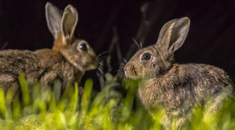 Cómo construir un majano para conejos de monte