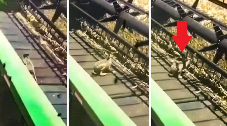 Un agricultor protagoniza este genial gesto al ver a una liebre en peligro