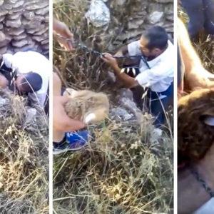 Cazadores de Ciudad Real acuden a la llamada de un pastor y salvan a una liebre que cayó a un pozo