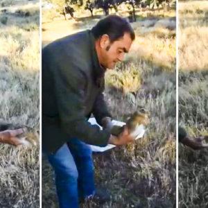 Extraordinario gesto de dos cazadores de Extremadura que se encontraron una liebre atrapada