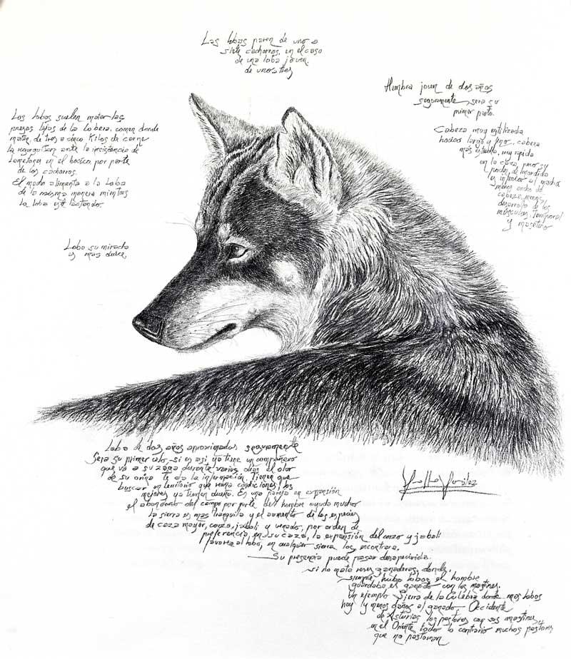 Una de las ilustraciones que podemos encontrar en el libro 'En tierra de lobos'. © Guillermo González