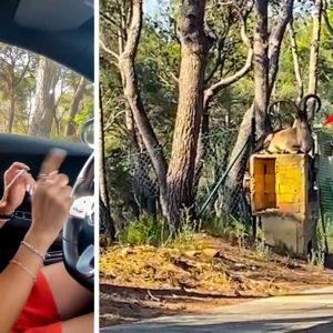 Dos chicas se asustan al ver a un imponente macho montés en la carretera: «¡Gema que se mueve!»