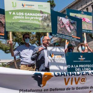 La Plataforma 'Ganader@ Viv@' rechaza la protección del lobo y advierte de sus consecuencias para el mundo rural