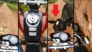 Hace un 'caballito' con su moto por un camino y se estrella contra una vaca