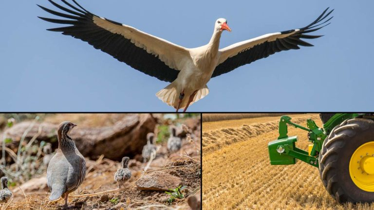 Cigüeña, perdiz con pollos y tractor. ©Shutterstock