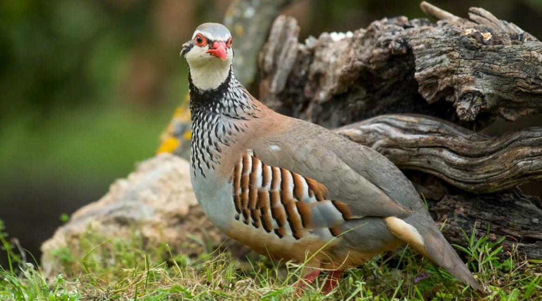 El 'Manifiesto de Biodiversidad' recopila casi 500 proyectos de conservación creados por cazadores