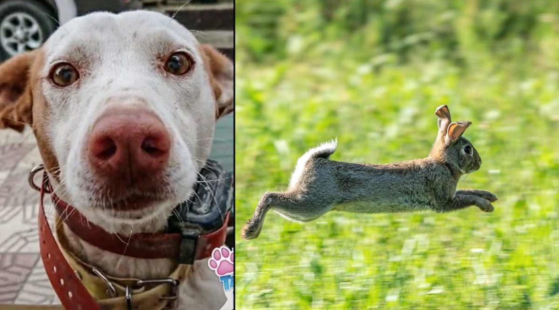 El podenco de esta animalista demuestra su raza: arranca la corteza de un olivo para cazar un conejo