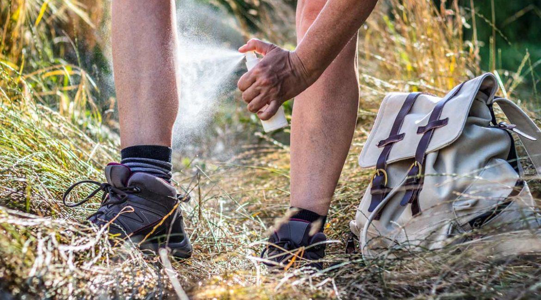 Cinco productos contra las garrapatas que arrasan en Amazon