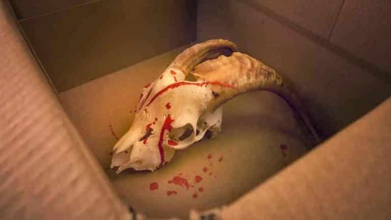 Imagen del contenido de la caja que los medios de comunicación atribuyeron a «cazadores de lobos».