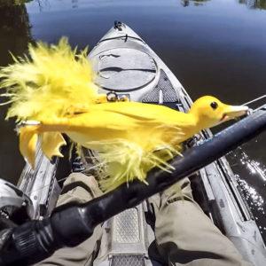 'Pato suicida', el exitoso señuelo para la pesca de grandes lucios que arrasa en Amazon