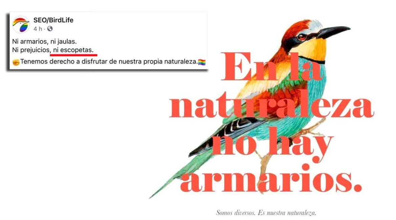 SEO/BirdLife 'celebra' el Día Internacional del Orgullo LGBT con un mensaje contra los cazadores