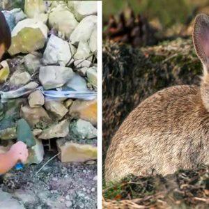 Así aprenden los cazadores a conservar la naturaleza desde niños