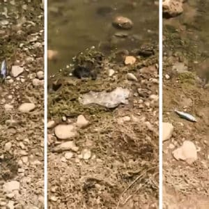 Cuatro individuos dejan la orilla de este pantano llena de peces muertos y basura