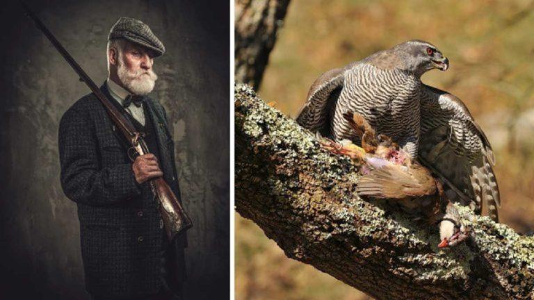 caza abuelo