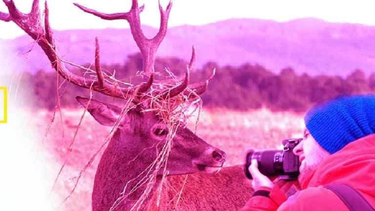 caza fotografica