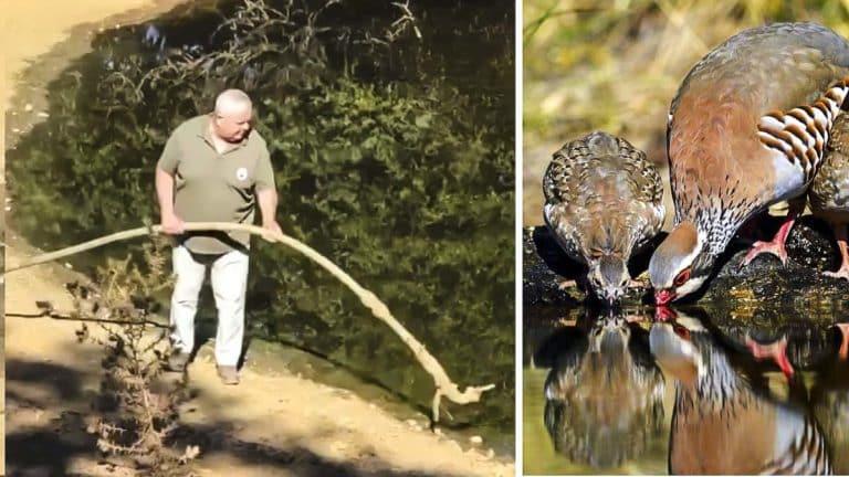 cazador agua animales