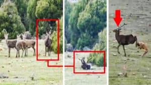 Intenta cazar a un ciervo en una montería pero la bala impacta donde no debía