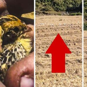 ¿Así cómo va a quedar una codorniz? La vídeo-denuncia de un agricultor rodeado de cigüeñas