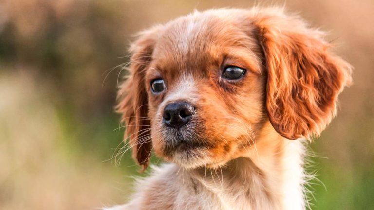 Elegir un nombre para un perro de caza puede llevar su tiempo. Aquí van algunos consejos. ©Archivo