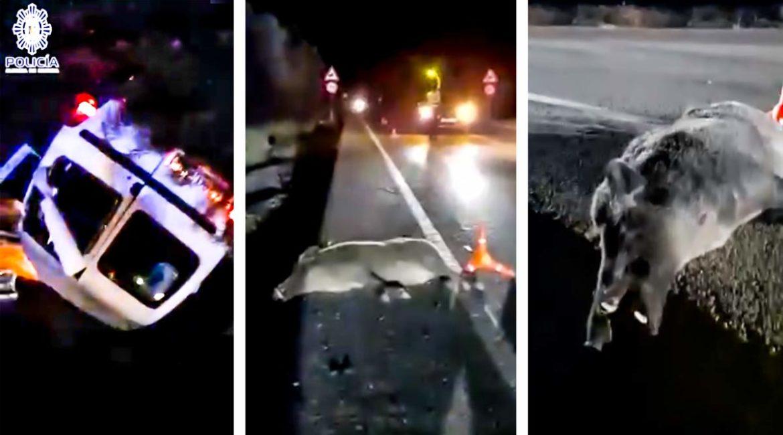 Un descomunal jabalí provoca un accidente múltiple y hace volcar a una furgoneta en Murcia