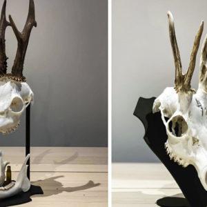 Dos maneras muy originales de conservar el trofeo de un corzo