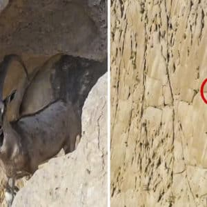 Mira dónde está escondido este ibex: la increíble toma del último peliculón de caza de Pedro Ampuero