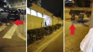 Un cazador graba a dos jabalíes en la puerta de urgencias de un hospital de Barcelona