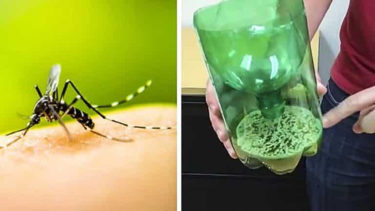 mosquitos trampa