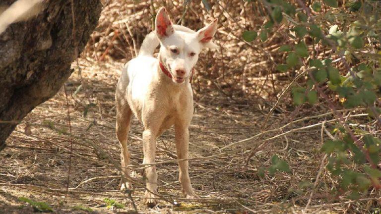 perrera malaga cazador