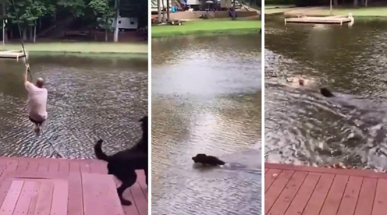 Esta es la increíble reacción de un perro cuando su dueño cae al agua
