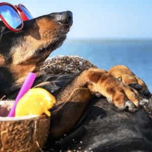 ¿A qué playas españolas puedo ir con mis perros de caza este verano?