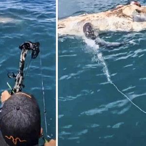 Un tiburón acude a este improvisado 'cebo' y lo cazan con arco