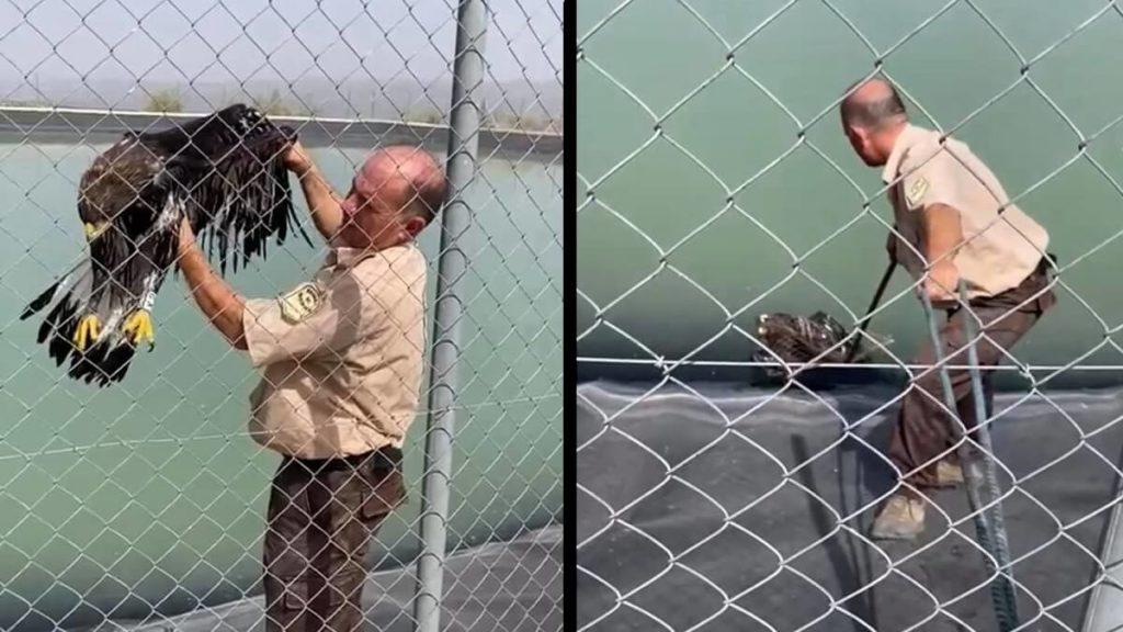 El guarda rescata al ave.