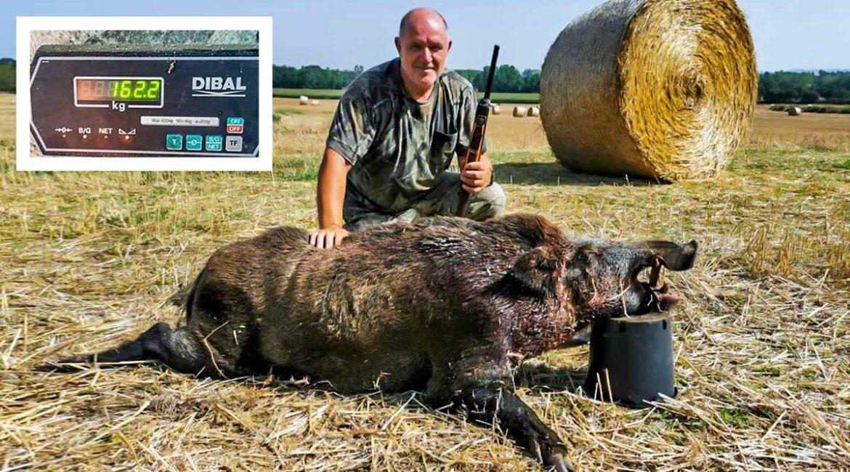 Cazado en Cataluña un jabalí de 162 kilos en una batida por daños a la agricultura