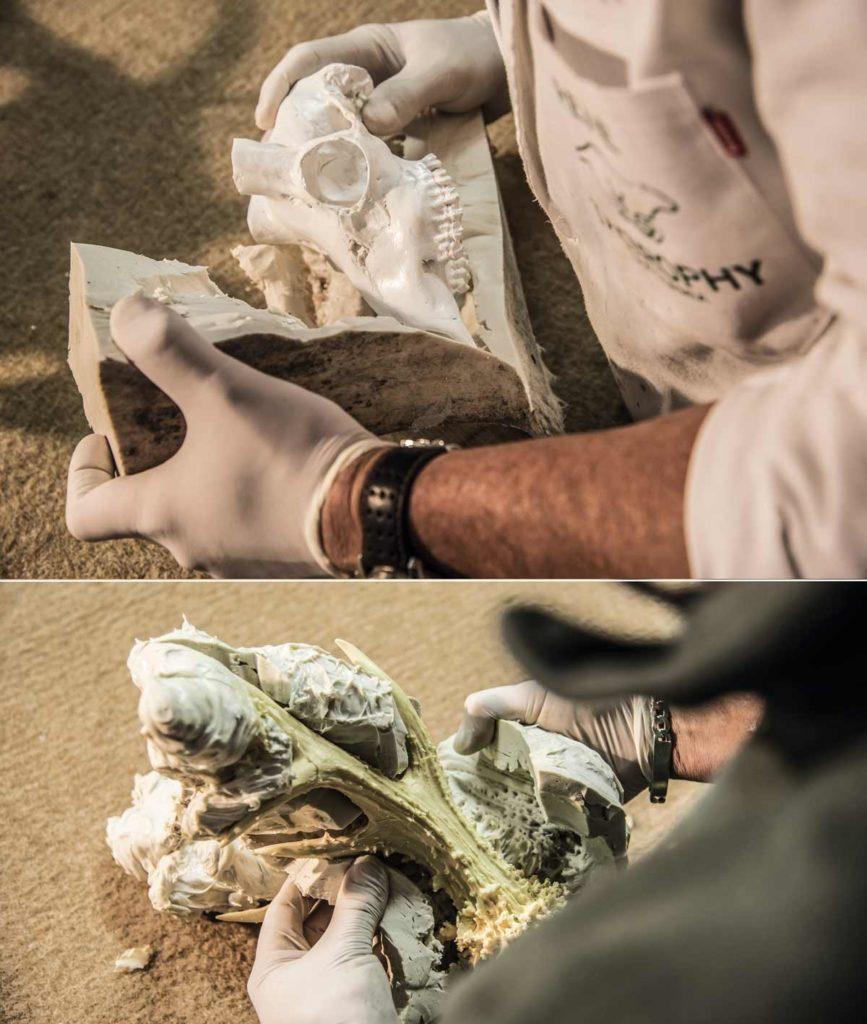 Proceso de desmoldado de la réplica del cráneo y de los cuernos. © Ángel Vidal