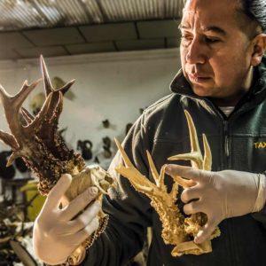 Así se hace una réplica idéntica de un trofeo de caza (corzo, ciervo, jabalí...)