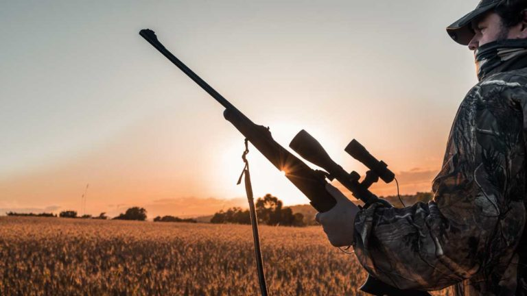 Un cazador aguarda a un jabalí en una siembra. © Angel Vidal