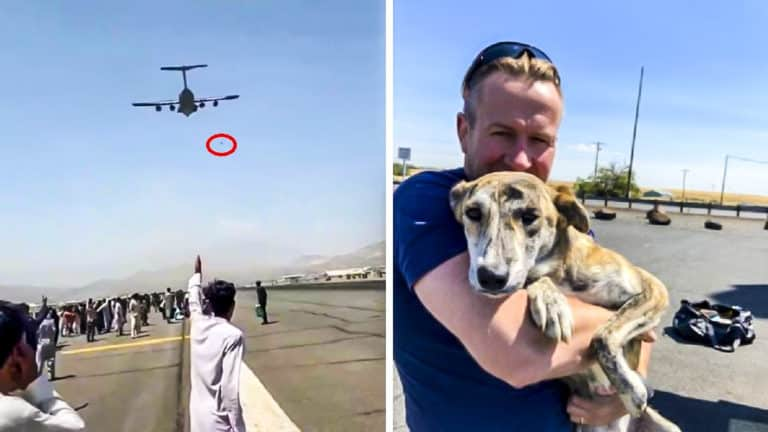 ex marine fleta avión mascotas Afganistán