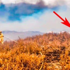 Un jabalí corre hacia un bombero que extinguía un incendio en Jaén