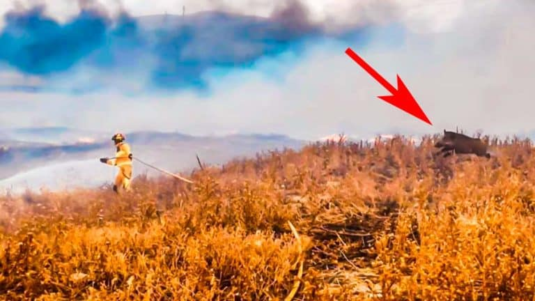 La imagen del jabalí corriendo hacia el bombero.