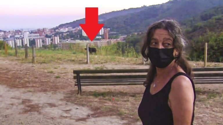 mujer atacada jabalí denuncia