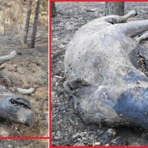Un cazador acude a alimentar a la fauna tras el incendio de Ávila y encuentra esta triste imagen