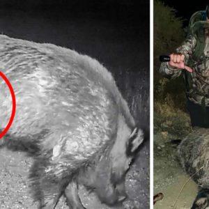 Caza un tremendo jabalí de 120 kg que sólo tenía tres patas: «Era famoso en toda Granada»