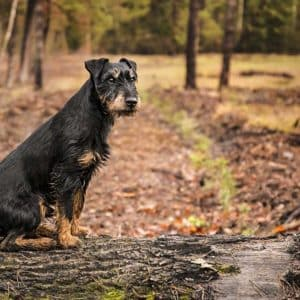 Un perro de caza se pierde en el monte y recorre 380 kilómetros para regresar a casa